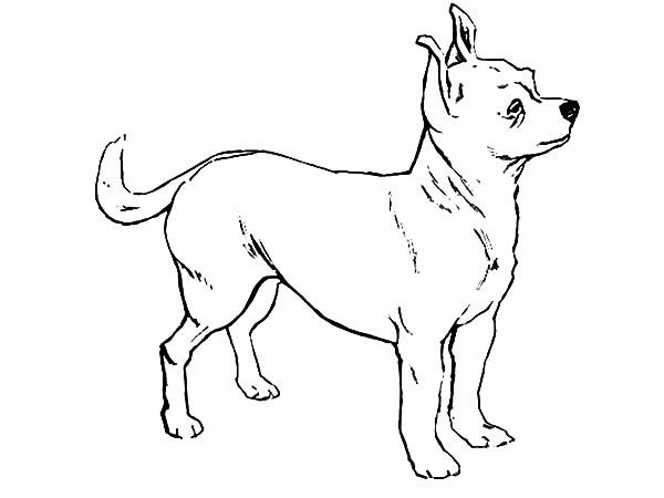 how to draw chihuahua dog coloring pages