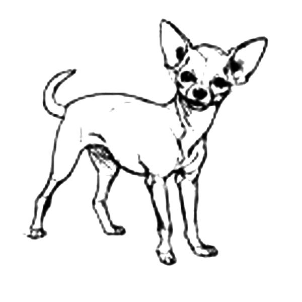 Chihuahua Dog Cute Pet Coloring Pages