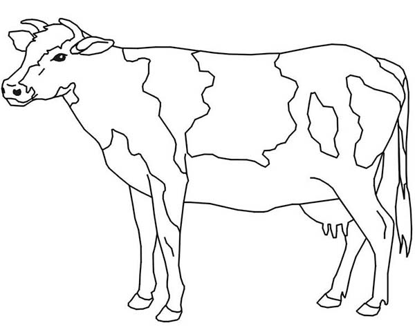 cow coloring page for kids - Cow Coloring Page