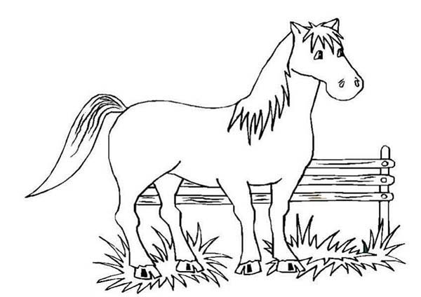 A Horse Rest After Running in Horses Coloring Page