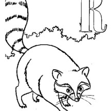 Alphabet  R is for Raccoon Coloring Page