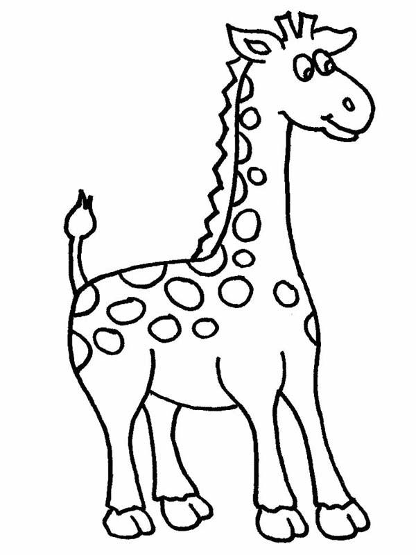 Amazing African Giraffe Coloring Page NetArt