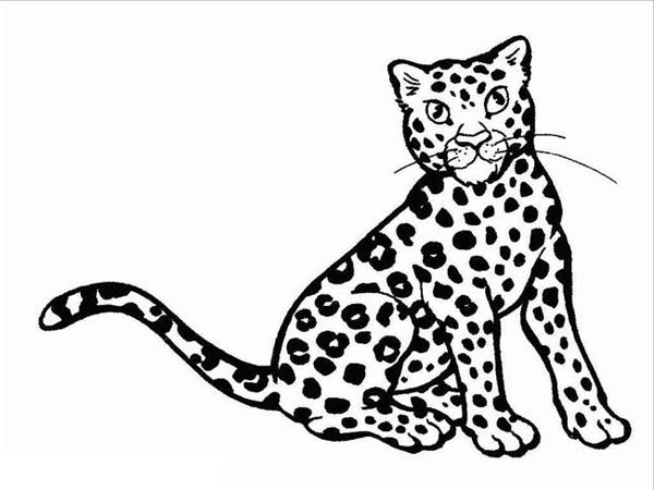 Amazing Cheetah Cat Coloring Page