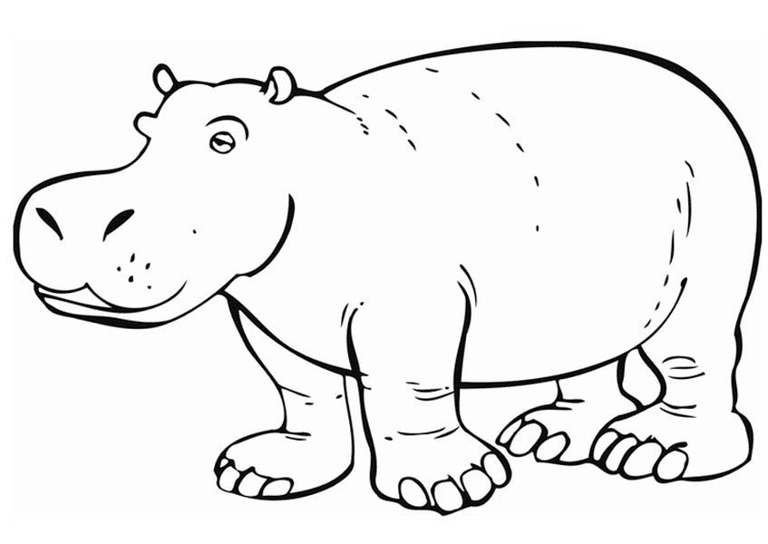 Amazing Hippo Coloring Page