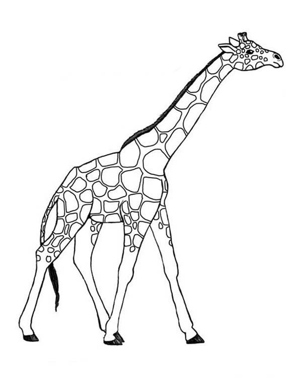 awesome giraffe coloring page