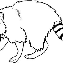 Awesome Raccoon Coloring Page