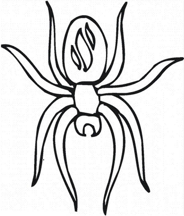 Awesome Spider Picture Coloring Page