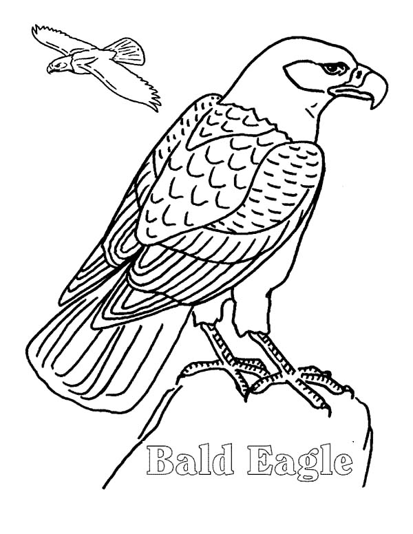 Eagle8 Coloring Page - Free Eagle Coloring Pages ... | 776x600