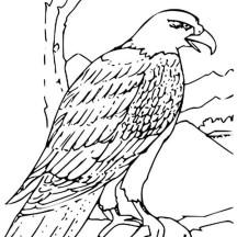 Bald Eagle Grabbing Fish Coloring Page