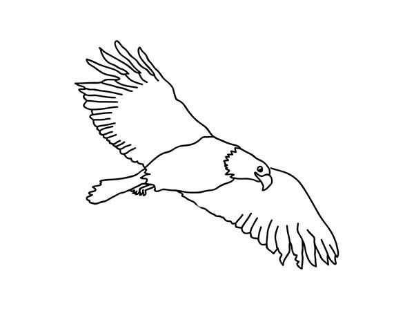 Bald Eagle Hunting for Rabbit Coloring Page