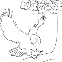Bald Eagle Lands on Tree Branch Coloring Page