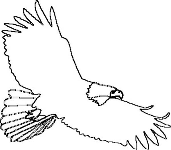 Bald Eagle Outline Coloring Page
