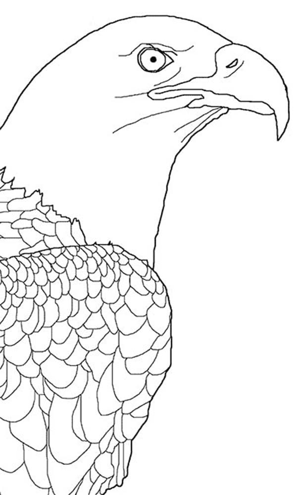 Bald Eagle Picture Coloring Page