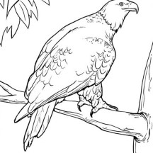 Bald Eagle in the Zoo Coloring Page