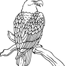 Bald Eagle is Hungry Coloring Page