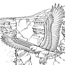 Bald Eagle of the Mountain Coloring Page