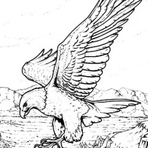 Bald Eagle with Sharp Claws Coloring Page