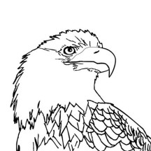 Bald Eagle with Smooth Feather Coloring Page