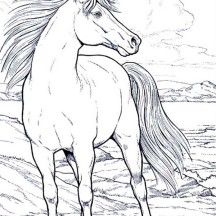 Beautifful White Horse in Horses Coloring Page
