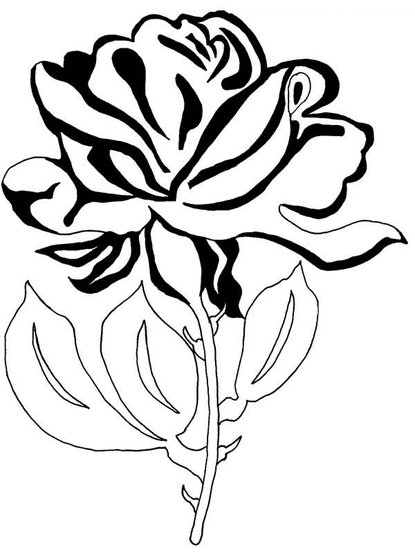Beautiful Rose Flower for You Coloring Page NetArt