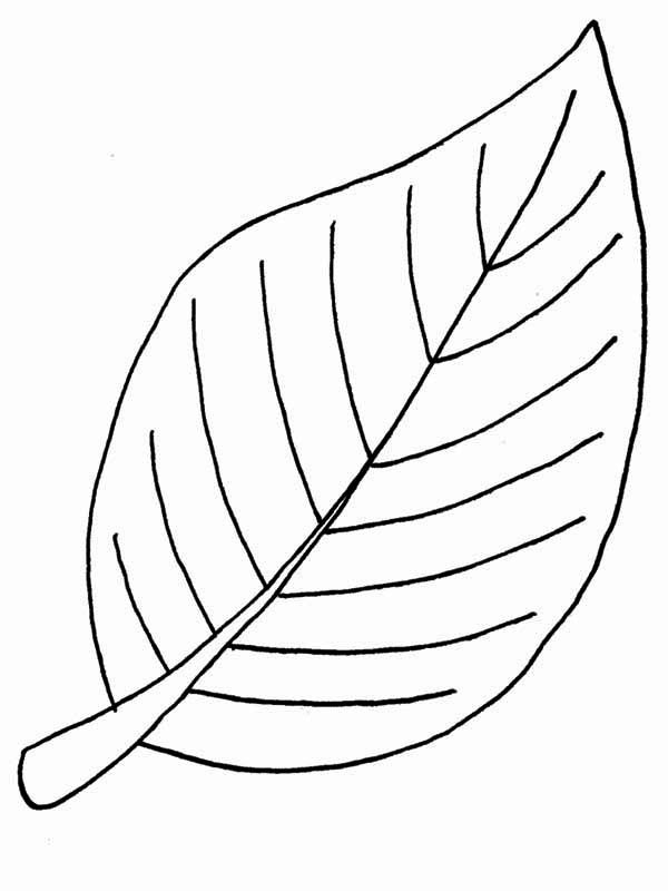 Beech Fall Leaf Coloring Page NetArt