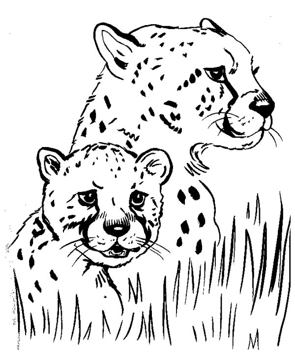 Cheetah Hide Under the Grass Coloring Page