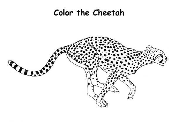 Cheetah Hunting Coloring Page