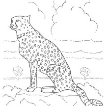 Cheetah Looking from Distance Coloring Page