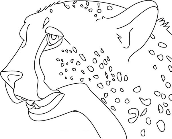 Cheetah Picture Coloring Page
