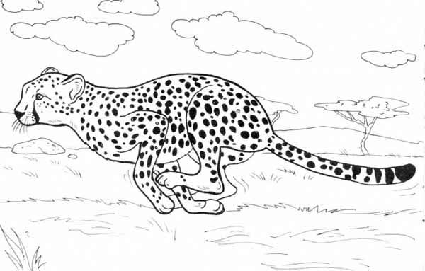 Cheetah Run Catch His Prey Coloring Page