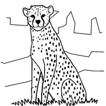 Cheetah in the Zoo Coloring Page