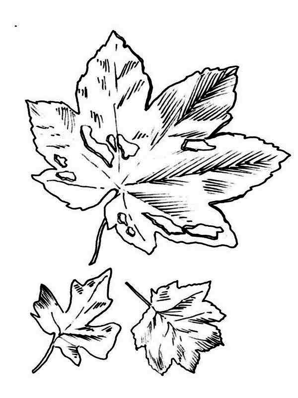 Dirty Fall Leaf Coloring Page