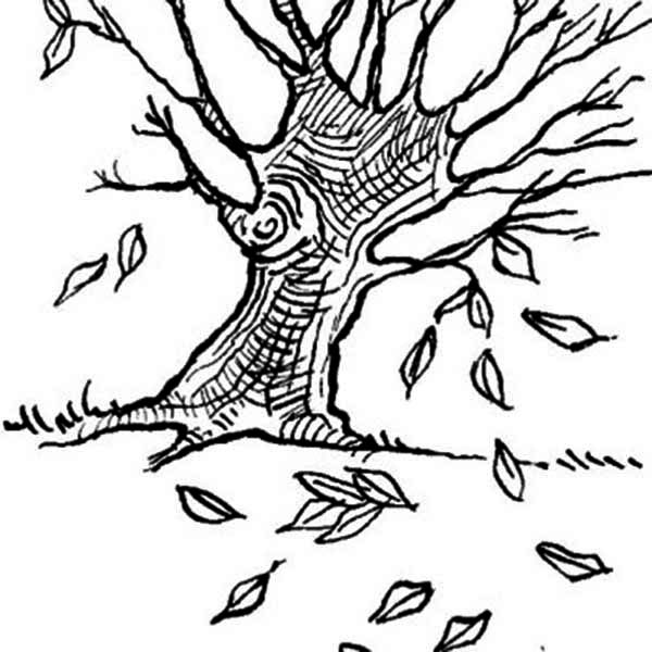 Dogwoods Tree Fall Leaf Coloring Page NetArt