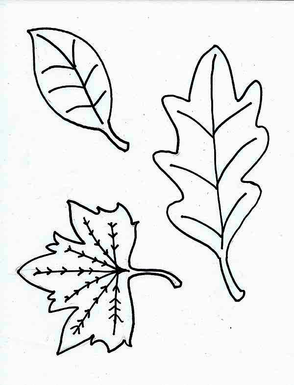Fall Leaf Image Coloring Page