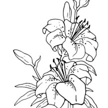 Flower Drawing Coloring Page