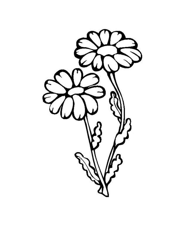 Flower Growing Up Coloring Page