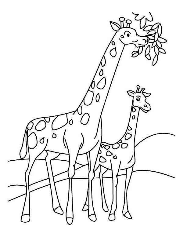 Giraffe Eating Leaves Coloring Page
