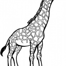 Giraffe Picture Coloring Page