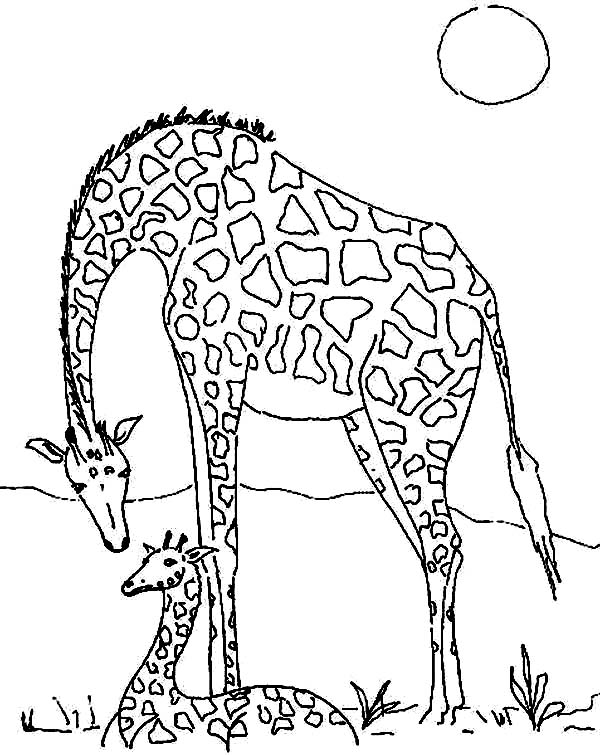 meadow animals coloring pages - photo#30