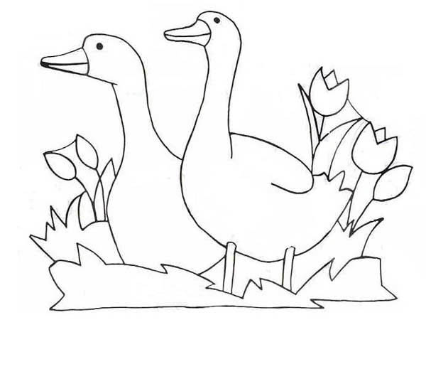 Goose Couple and Tulips Flower Coloring Page