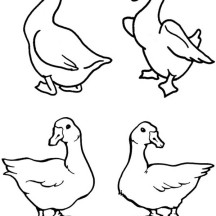 Goose Picture Coloring Page