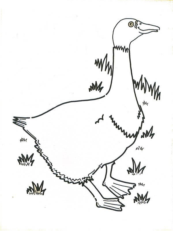 Goose Walking on the Grass Coloring Page