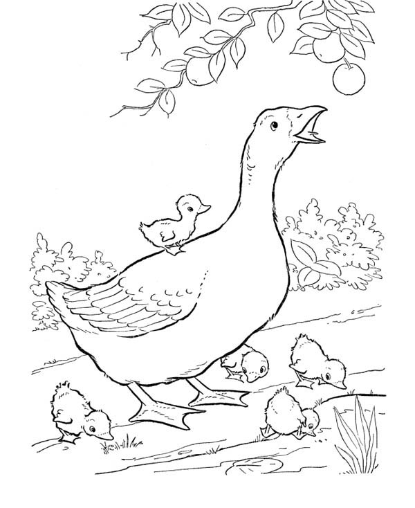Goose and Her Babies Coloring Page
