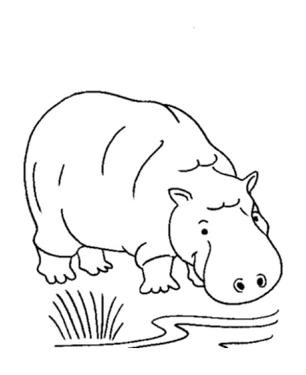 Hippo Drink in Riverbank Coloring Page
