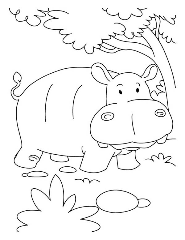 Hippo in the Jugle Coloring Page