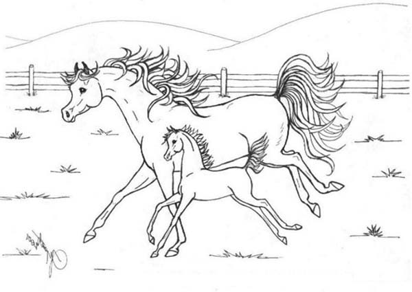Horse Mother Running with Her Baby in Horses Coloring Page ...