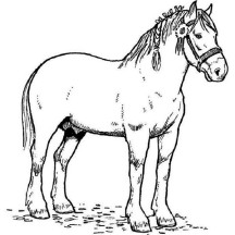 Horse Race Champion in Horses Coloring Page