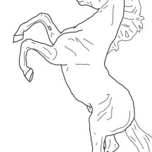 Horse Rearing in Horses Coloring Page