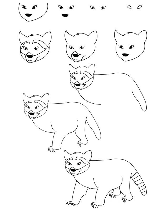How to Draw a Raccoon Coloring Page - NetArt