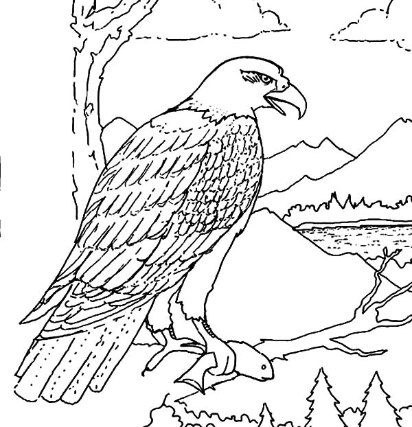 Hungry Bald Eagle Eat Coloring Page